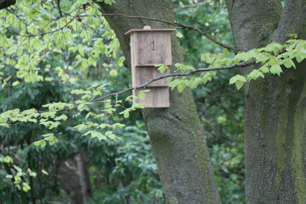 Bat box waiting for tenants