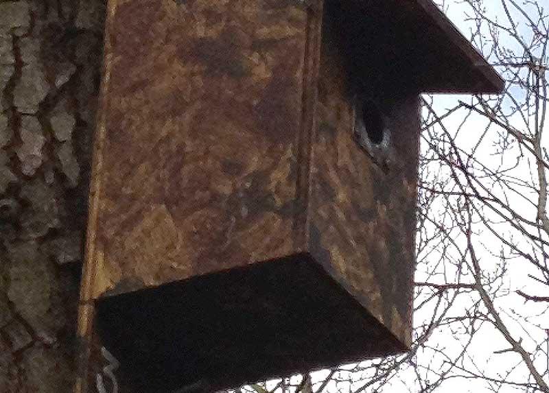 Dothill bird box