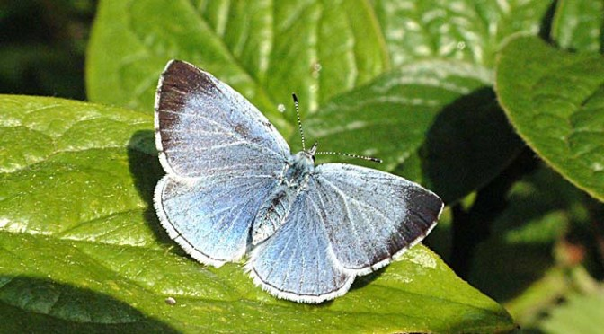 Butterfly Walk Saturday 16 July at 2.30pm