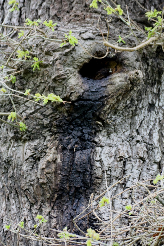 Bat roost in tree