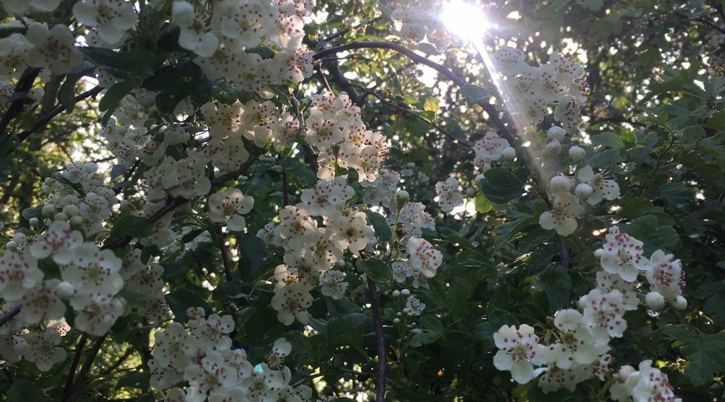 Sunny blossoms Libby Agate