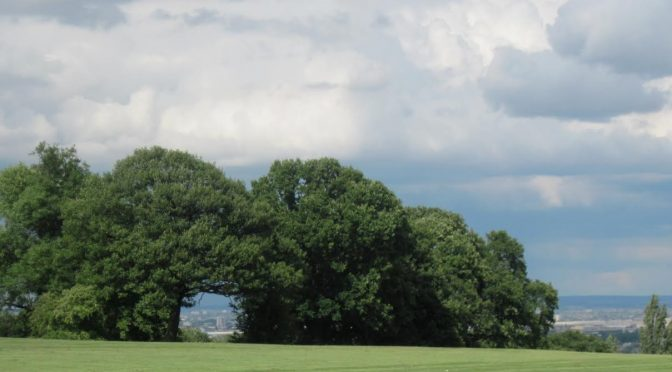 Using the park safely during the pandemic