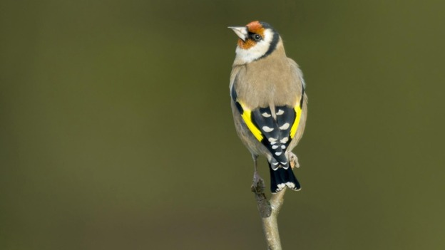Bird Walk – Saturday 21 March – 9am start