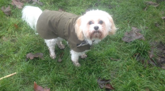 Shrub and tree planting in the park